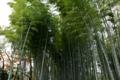高台寺の竹林