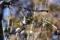 梅林園のメジロ