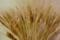 店内の小麦