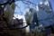 今朝の清水谷公園のハクモクレン