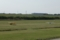 江戸川河原のグライダー