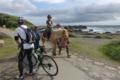 観光用の馬