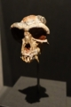 霊長類の化石