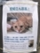 親猫里親募集の貼紙