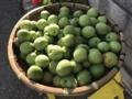 実家で収穫した梅の実