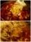 箸リフトと 鶏肉