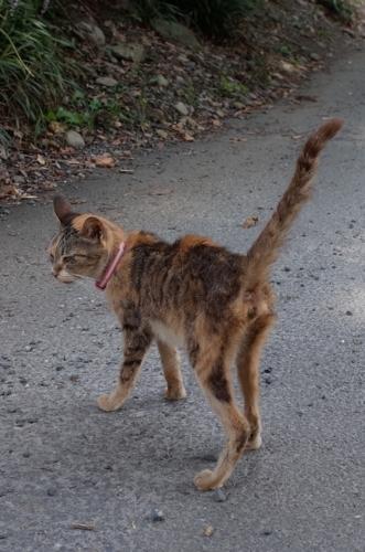 門前のネコ