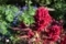 森林公園の花