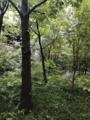 大手町の森