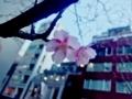 京橋スクエアビルのカワズザグラ