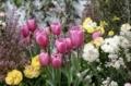三越花々祭