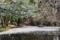 森林公園の花筏