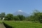 茶畑の富士山