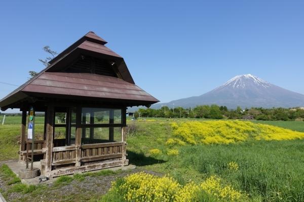 菜の花と富士山とバス待合所