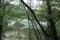 林越しに見下ろした精進湖