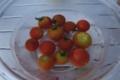 差し入れのトマト