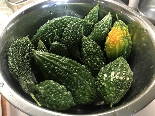 収穫したウラナリゴーヤ