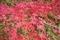 DIC川村記念美術館の紅葉