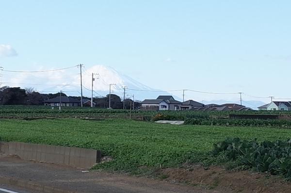 大根畑の先に富士山が見える