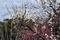 青葉の森公園の梅園