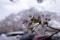 小林牧場のソメイヨシノ