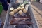 ホッケの燻製と野菜