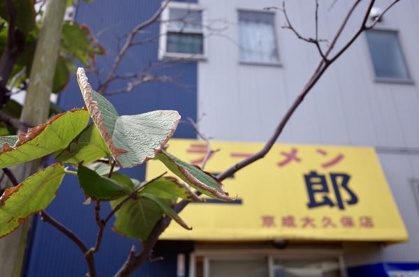 ラーメン二郎京成大久保店と白雲木