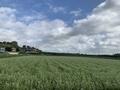 八千代市内の蕎麦畑