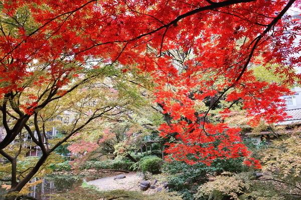 清水谷公園の紅葉🍁