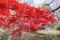 清水谷公園の紅葉