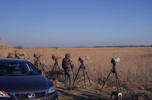 野鳥撮影のカメラ