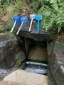 御手洗池の湧水