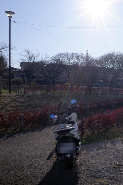 梅林公園とPCX150
