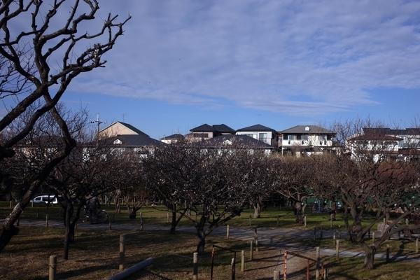 習志野梅林公園