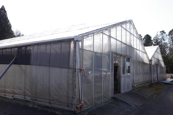 佐倉きのこ園のビニールハウス