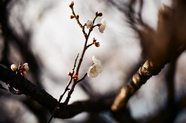F3で撮った習志野梅林園2