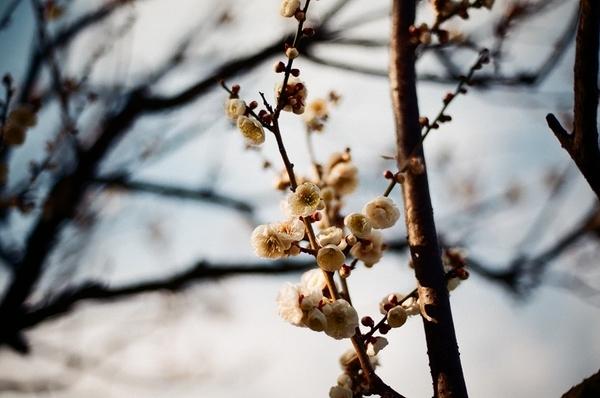 F3で撮った習志野梅林園4