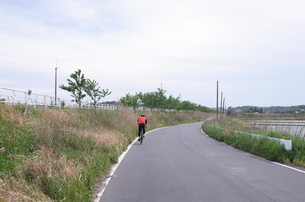 印旛捷水路沿いを進む