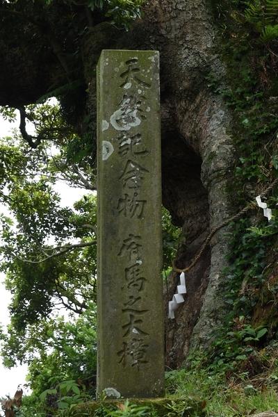 「天然記念物府馬之大楠」碑