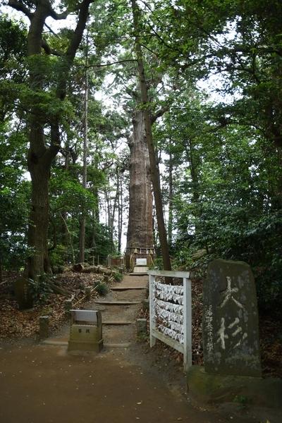 台方麻賀多神社の大杉入口