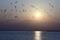 コアジサシと夕陽