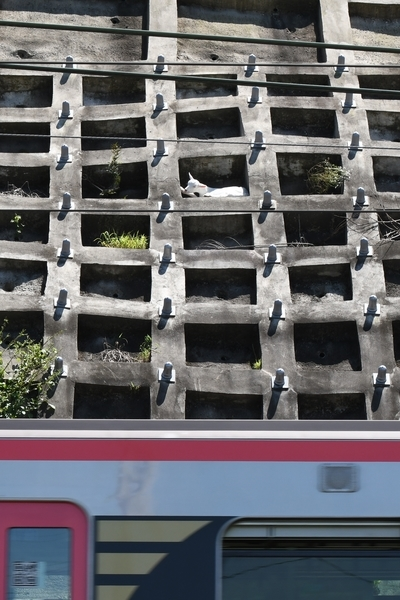 京成電車とポニョ