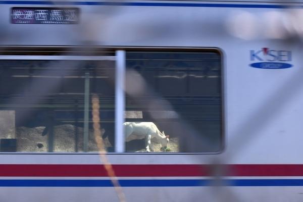 京成電車越しのポニョ