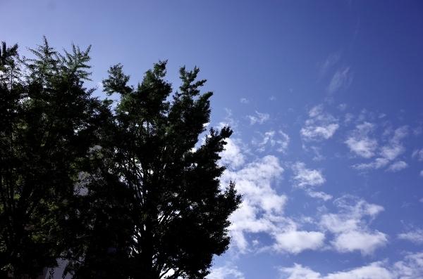 マンションの庭から空を仰ぐ