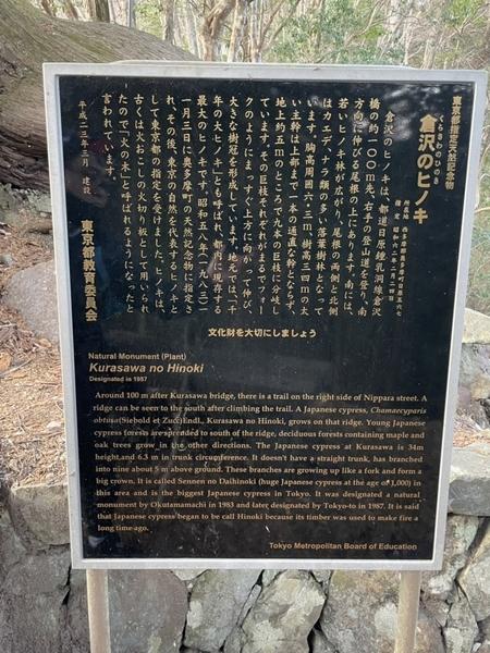 倉沢のヒノキの案内板