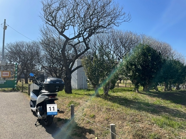 習志野梅林園とPCX150