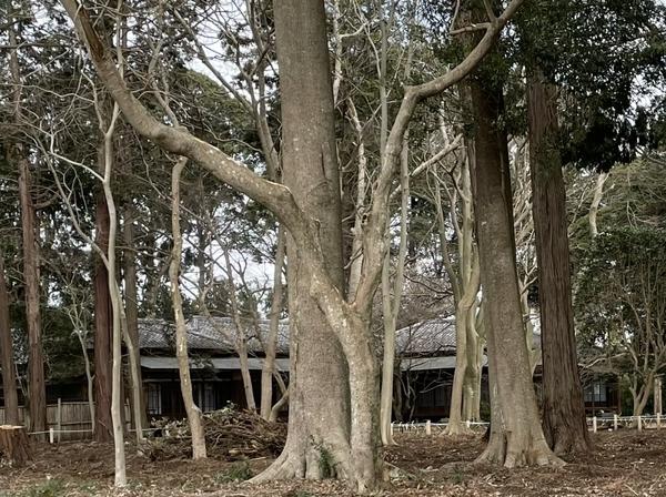 覗き見た旧岩崎家末廣別邸3