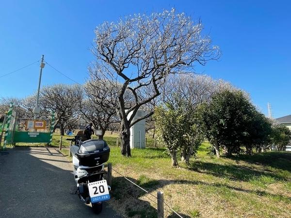 習志野梅林公園とPCX150
