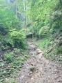 ぬかるむ山道