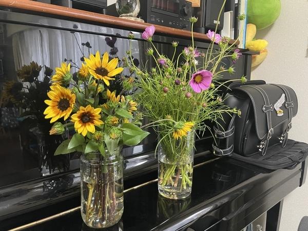 摘んだ花を生ける